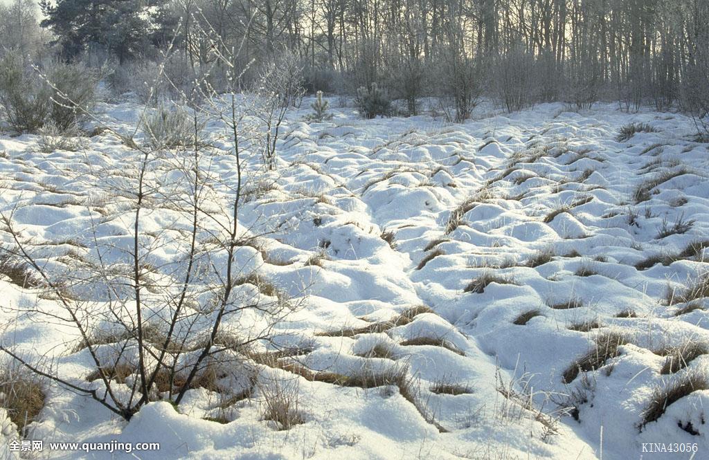 荷兰,欧洲,海德,冬天,1998年,风景,35毫米图片