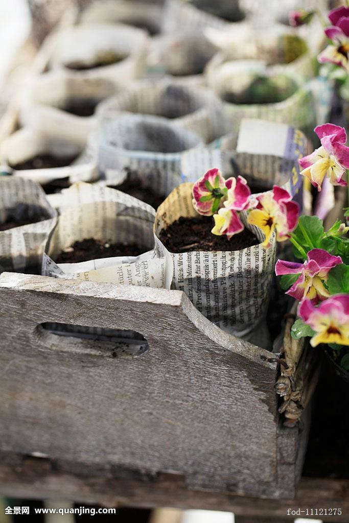 概念,许多,报纸,室外,植物,季节,春天,春花,如春,三色紫罗兰,包着图片