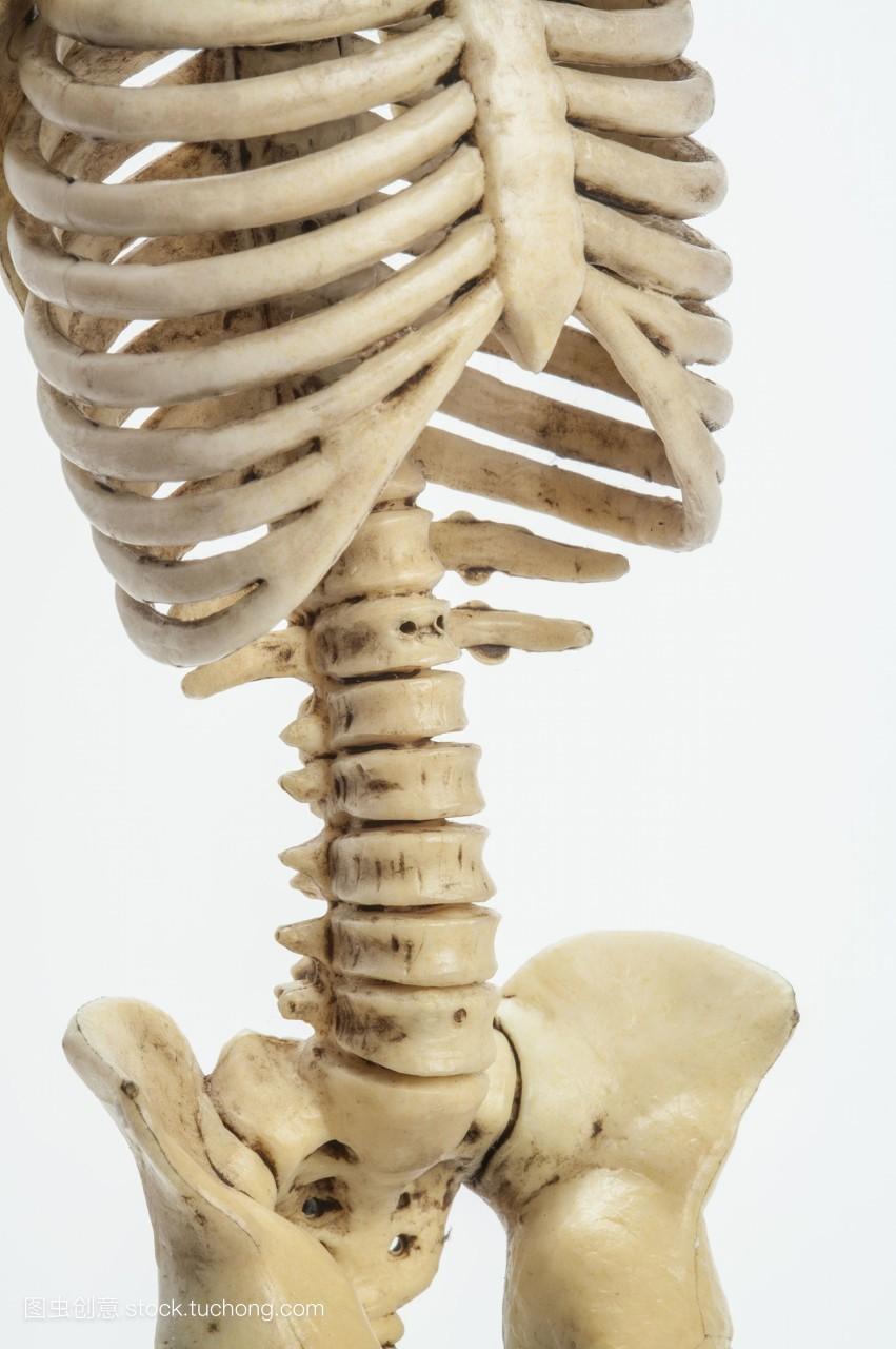 腰部骨骼固)�_彩图,人体骨骼,室内,无人,直图,特写,医疗检查,分析,身体腰部,影像,人