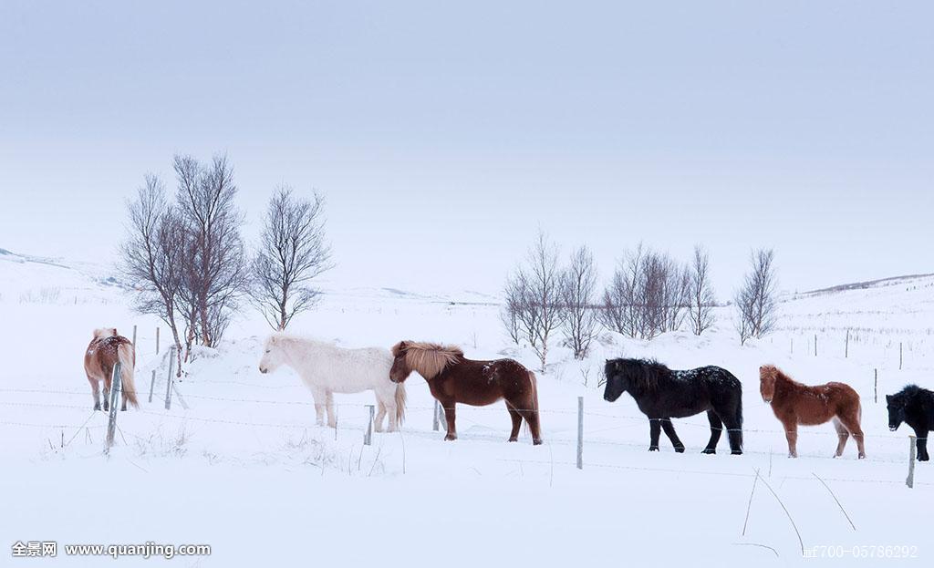 宁静,平静,静态,静谧,留白,下雪,雪,降雪,雪景,地点,田野,动物,乡村图片