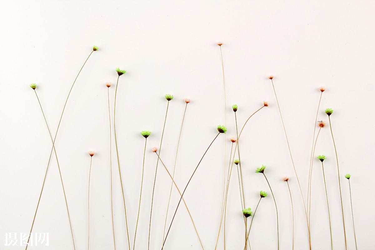 碎花,一束花,小花,绿色的花,红色的花,简洁,环保背景,文艺范,小清新图片