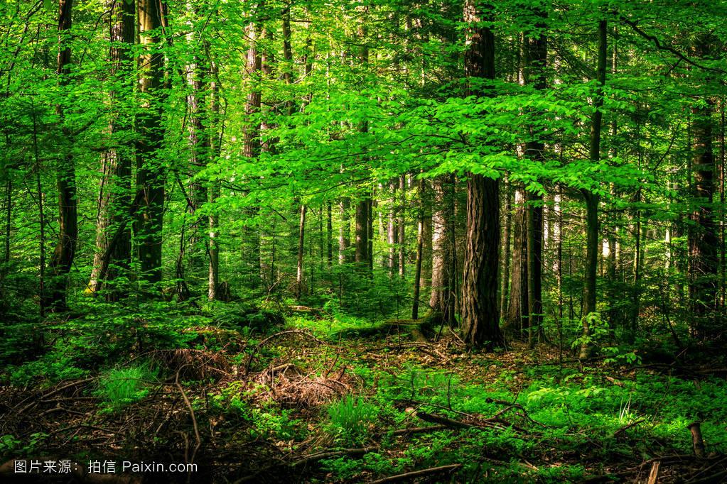 绿色的夏天的森林图片