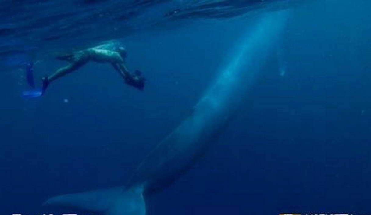 蓝鲸画图片大全大图_小蓝鲸
