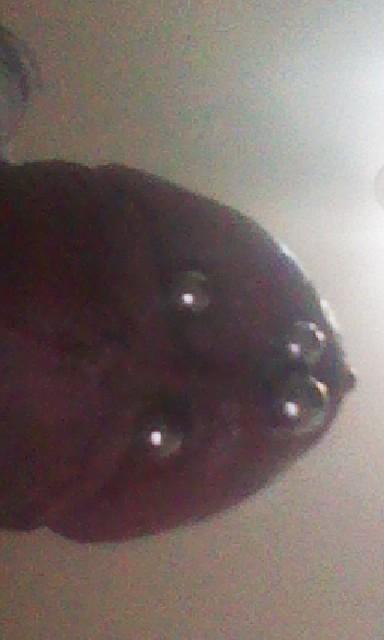 穿环的猛女_穿環 | [組圖+影片] 的最新詳盡資料** (必看!!) - www.go2tutor.com