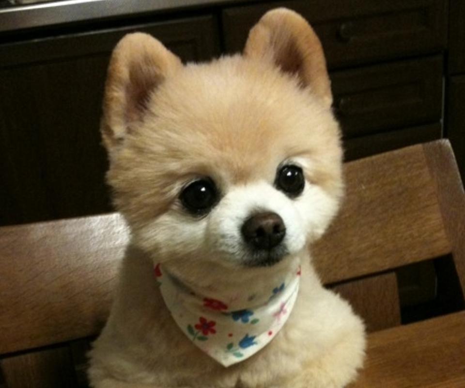 宠物狗图片和名字_狗狗品种大全及名字