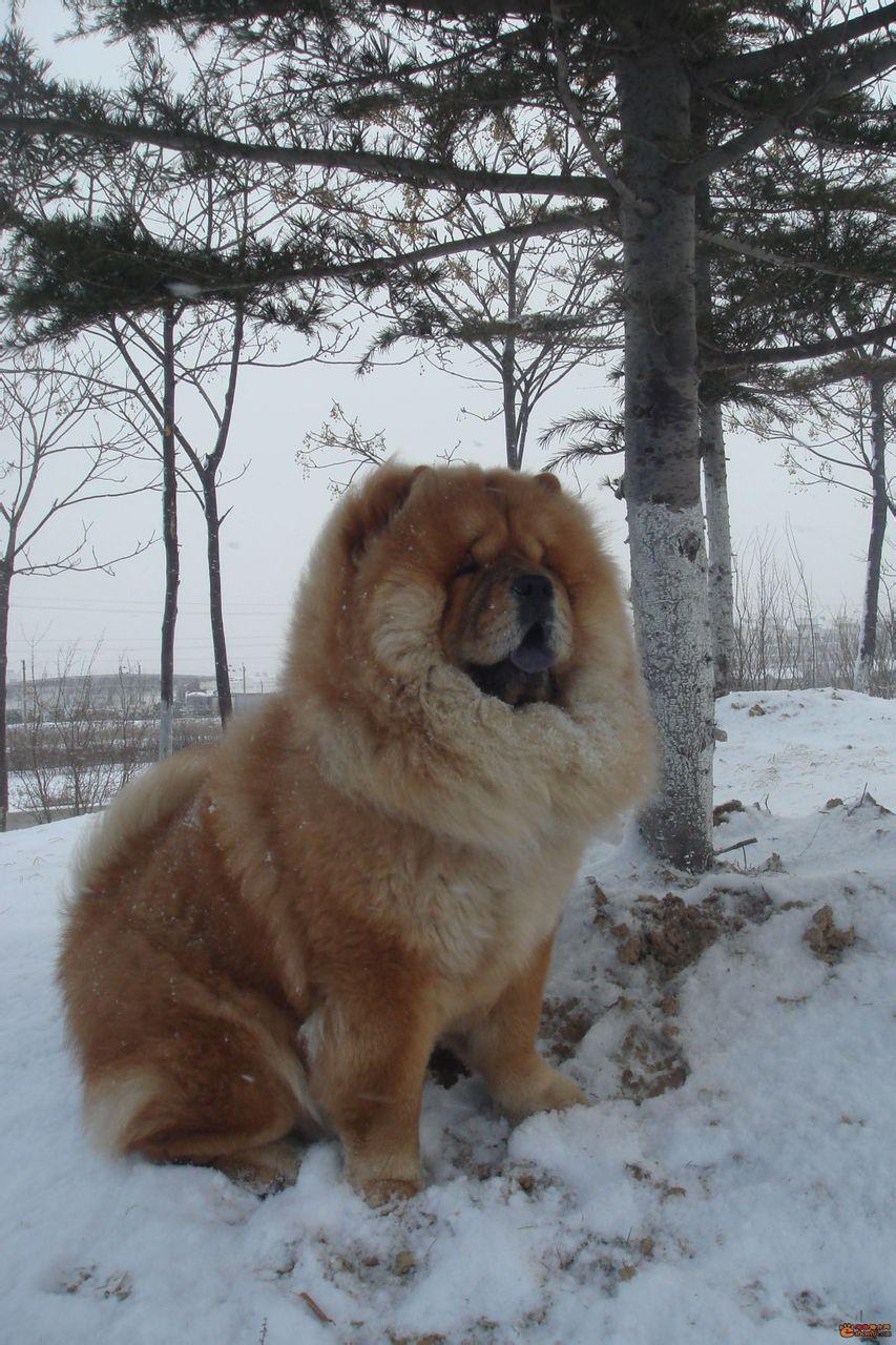 给狗带牛的名字_宠物狗品种大全-宠物狗品种图片大全/中国宠物狗品种大全/狗狗 ...