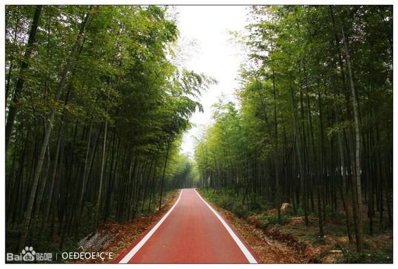 宜兴自行车慢行公园_龙池山自行车慢行公园--宜兴绿道美图_宜兴宜城吧_百度贴吧