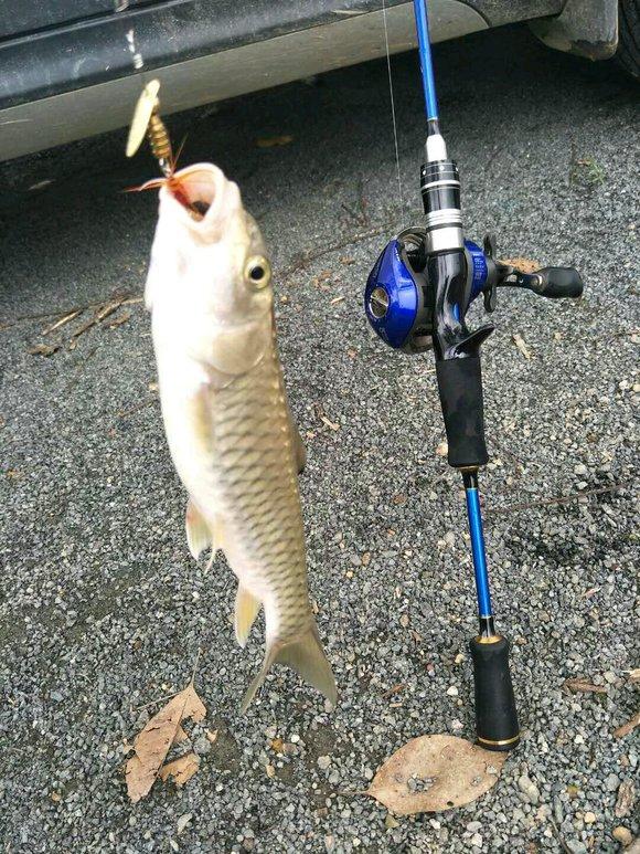 钓鱼吧_【图片】连杆军鱼🐠【钓鱼吧】_百度贴吧