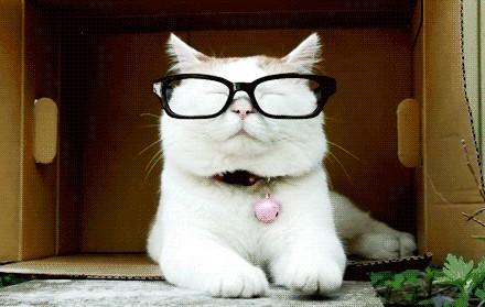 日本田园猫_话说那种日本田园猫去哪里弄啊_猫吧_百度贴吧