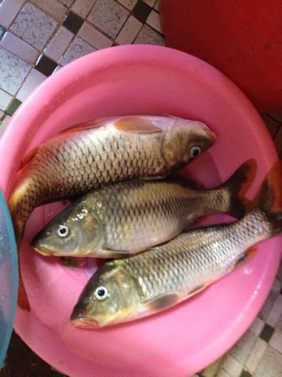 钓鱼吧_【图片】手机鱼获照【钓鱼吧】_百度贴吧