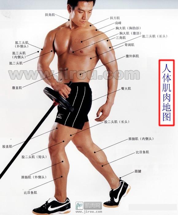 身体肌肉图_人体肌肉分布图_健身吧_百度贴吧