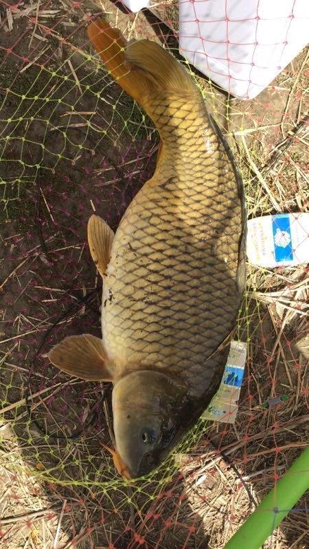 钓鱼吧_【图片】北京周边野钓水库【北京钓鱼吧】_百度贴吧