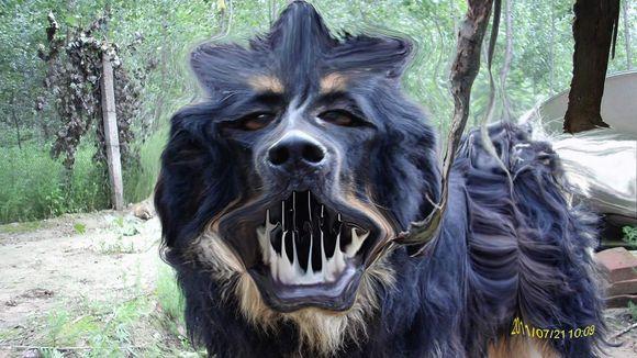 鬼獒咬死藏獒_鬼獒_幽灵犬_藏獒鬼獒_鬼獒咬死狮子视频 - 7262图片网
