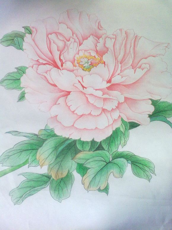 彩铅花_【教程】桃可拉花卉教程_彩铅画吧_百度贴吧