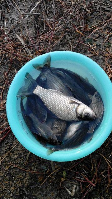 钓鱼吧_今天鱼获【钓鱼吧】_百度贴吧
