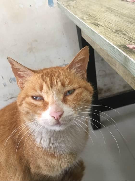 吃死猫的眼睛_【图片】求助帖 !猫眼睛里面有白色黏液!_猫吧_百度贴吧