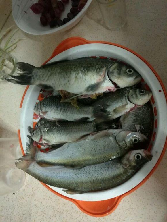 钓鱼吧_【图片】鱼获【钓鱼吧】_百度贴吧