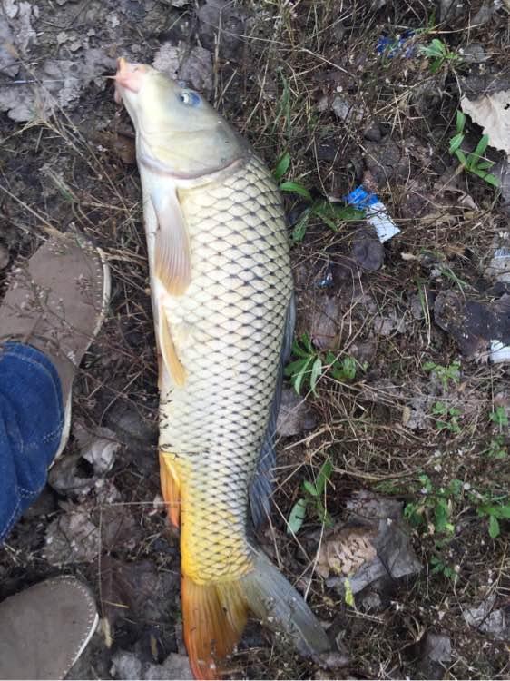 钓鱼吧_【图片】钓了一天,终于上鱼了!猜猜多重?【钓鱼吧】_百度贴吧