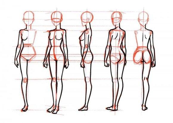 动漫人体结构_pixiv教程人体结构