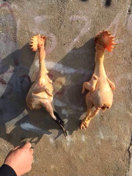 我大被鸡吧强奸了_是谁强奸了我家的母鸡