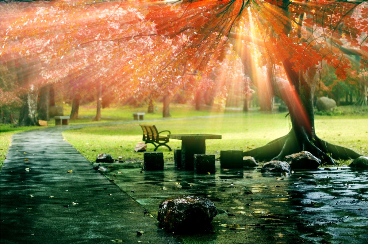仙境,耶穌光,丁達爾效應,光束,樹林,陽光,光線,森林,綠色,自然,意境圖片
