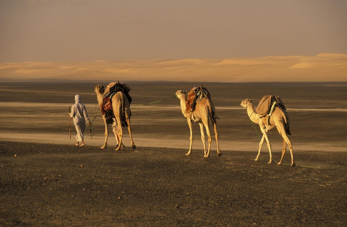 北非,埃及,駱駝科,駱駝,戶外活動,徒步旅行,步行,沙丘,僅男人,僅一個圖片