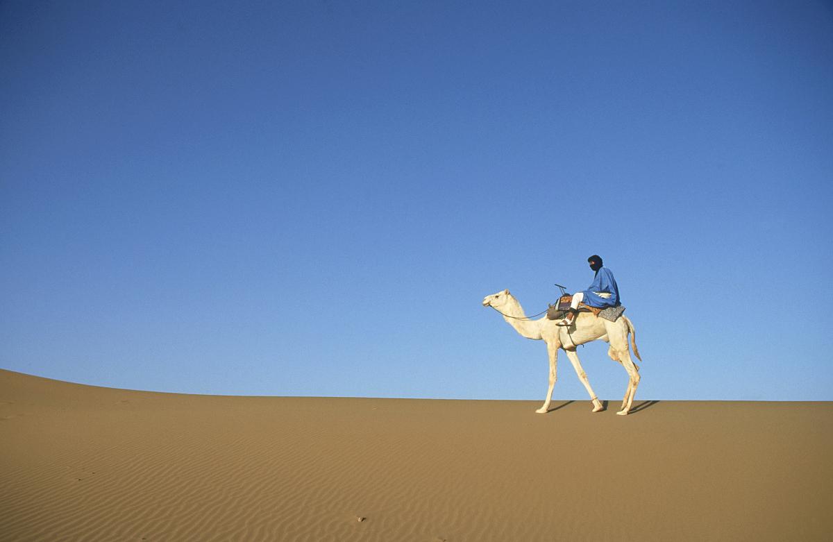 摩洛哥,原生態文化,動物,哺乳綱,駱駝,傳統文化,沙漠,干旱地帶,一個人圖片