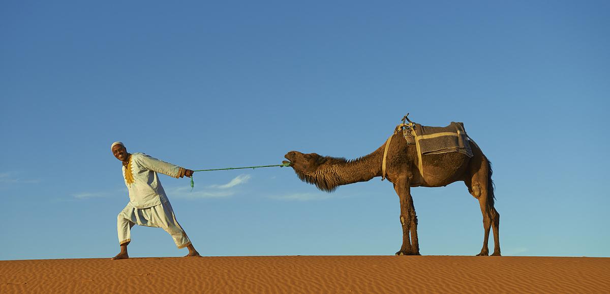僅男人,僅一個男人,脊椎動物,哺乳綱,動物,拿著,駱駝,沙漠,戶外,全身圖片