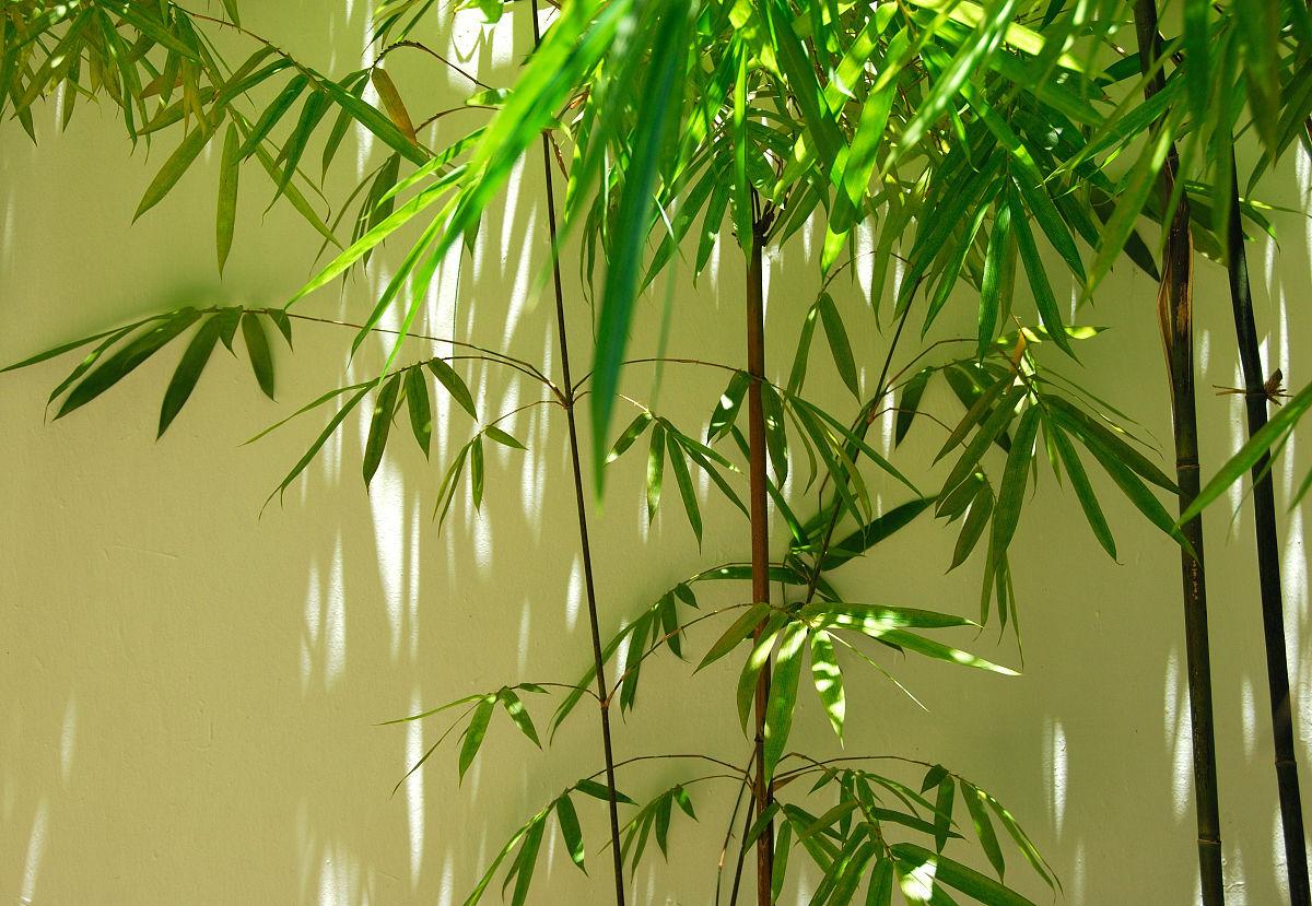 雨竹   壁纸_竹gg:#d_竹壁纸_竹文化_国画竹_系统之家网
