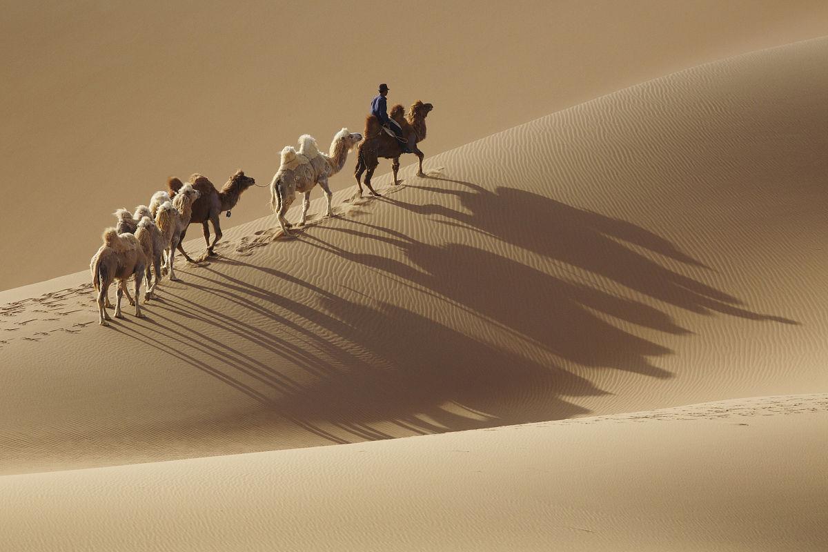 亞洲,家畜,成一排,地形,沙漠,沙子,白晝,陰影,沙丘,內蒙古,一個人圖片