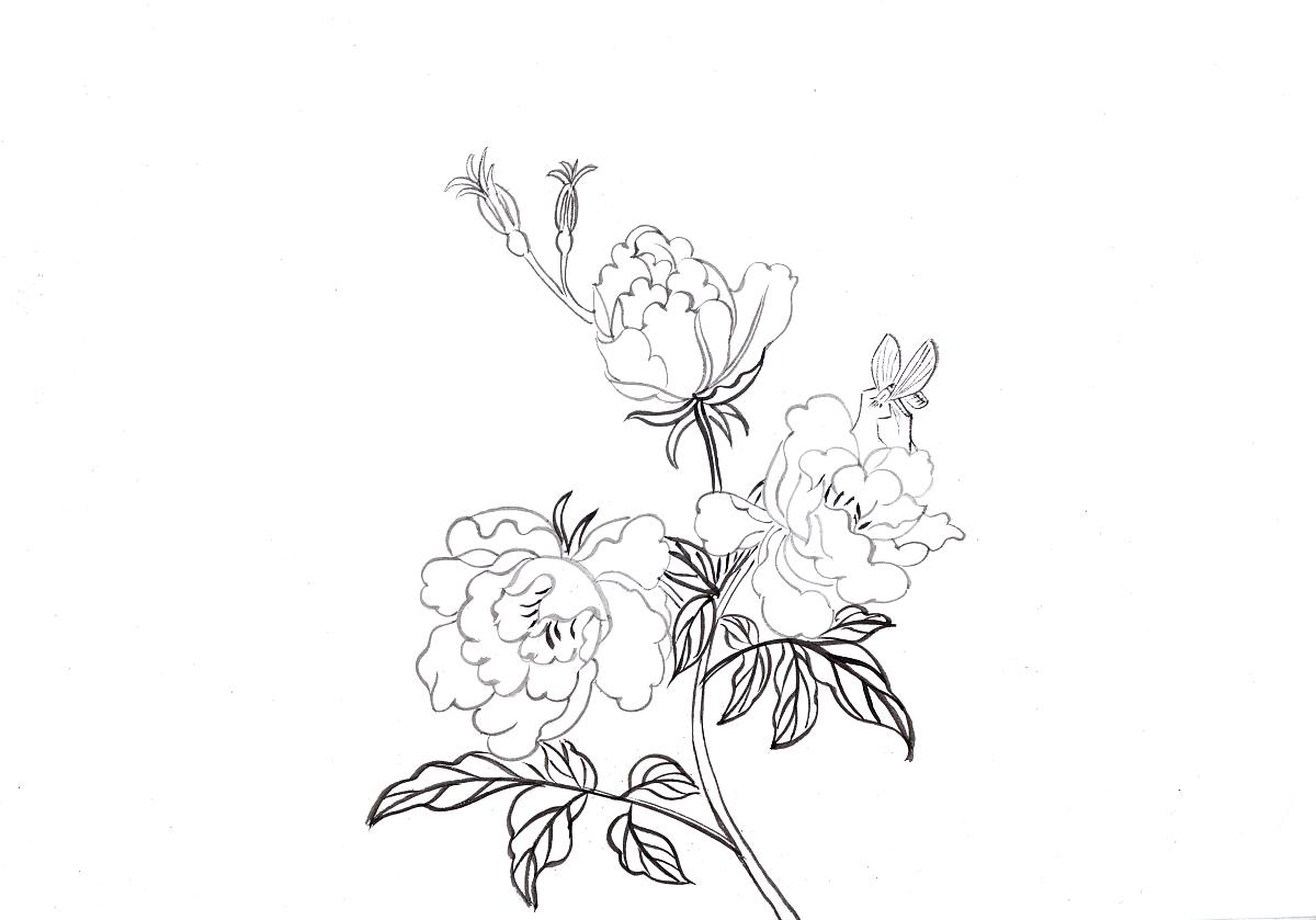 果酱画盘素描图_植物白描图片大全-白描画图片大全/植物简单白描图片大全/白描 ...