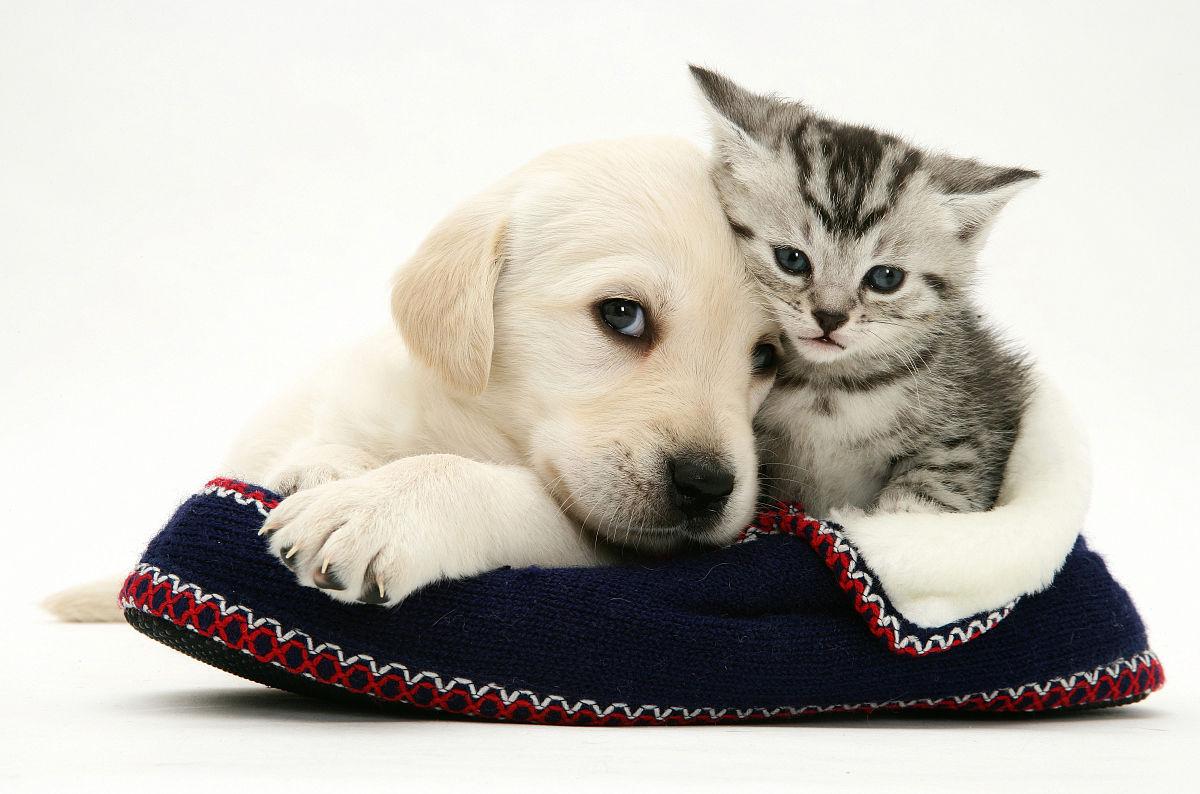 小色狗和猫交配_狗和猫和谐相处-两只猫多久能和谐相处-猫和狗配生的图片大全