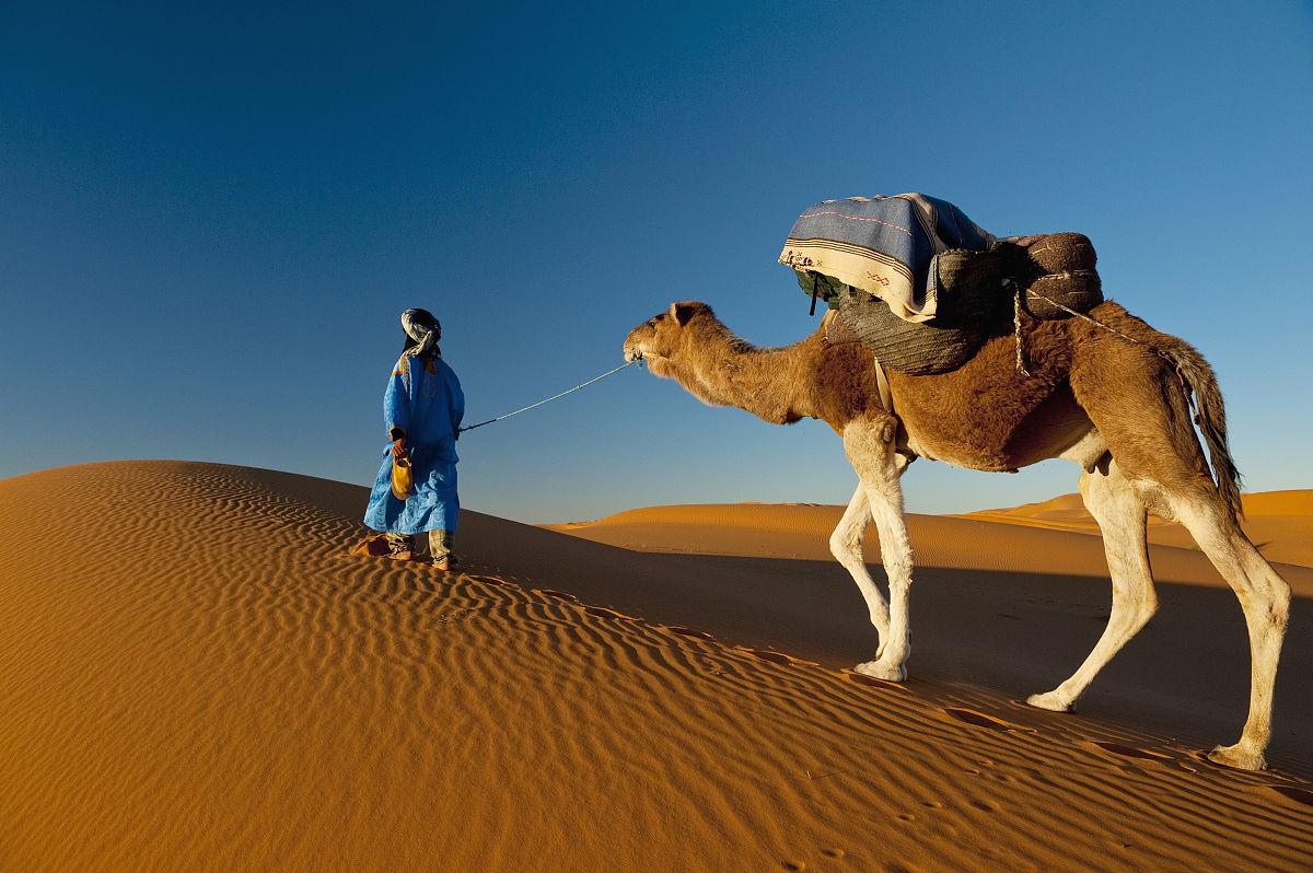 在活動中,旅行的人,僅男人,僅一個男人,簡單,柏柏爾人,駱駝,沙漠圖片