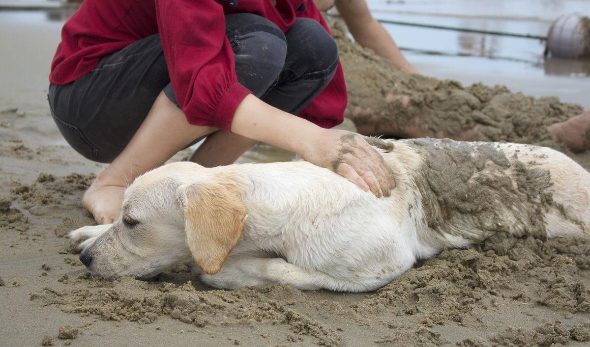 少女和狗做爱视频����_寂寞少女与狗交配