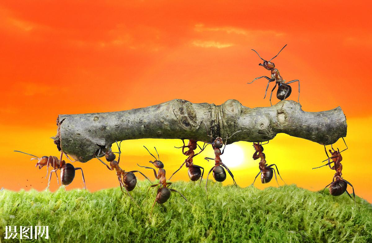 团结友爱的谚语_团结互助的谚语有哪些-团结互助的句子,团结互助的格言有哪些 ...