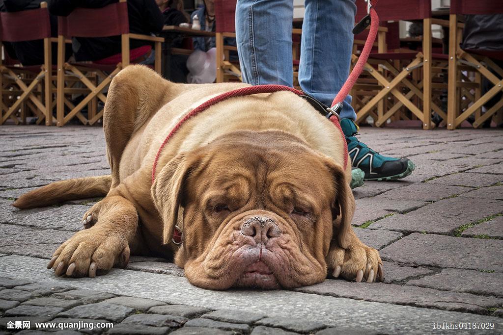 拴狗绳子固)��i)�aj_不拴狗绳的狗怎么办