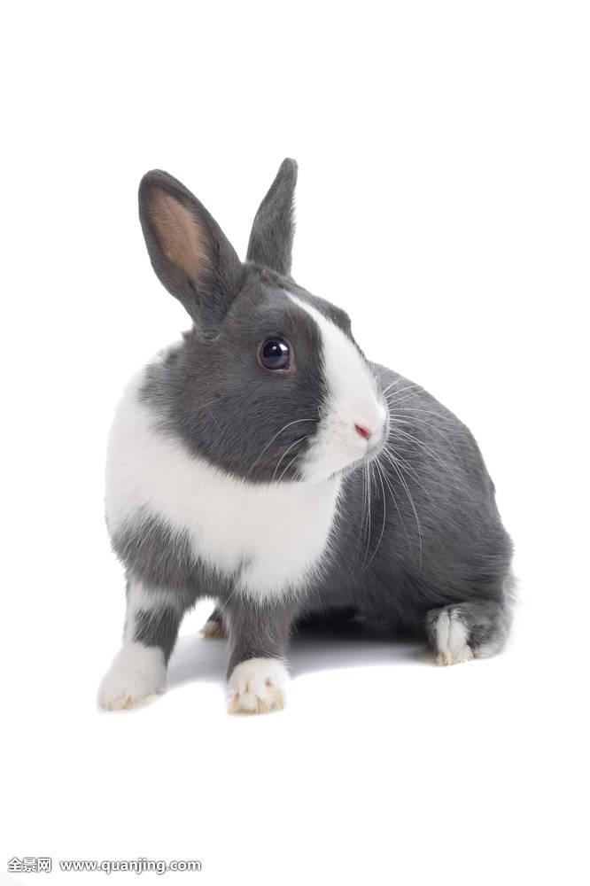 长尾巴的兔子_站立的兔子尾巴图片-兔子的尾巴 小说|兔子的尾巴故事|长尾巴的 ...
