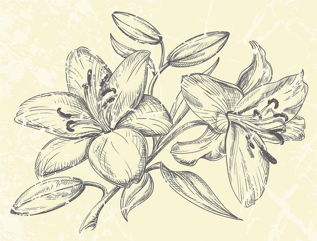 果酱画盘素描图_素描简易花卉图片图片展示_素描简易花卉图片相关图片下载