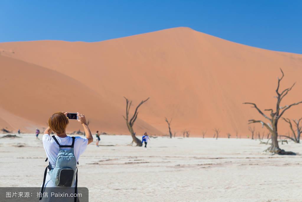 沙,女人,樹,風景,干旱,自拍,遙遠的,旅行者,沼澤,探索,全景,一個人圖片