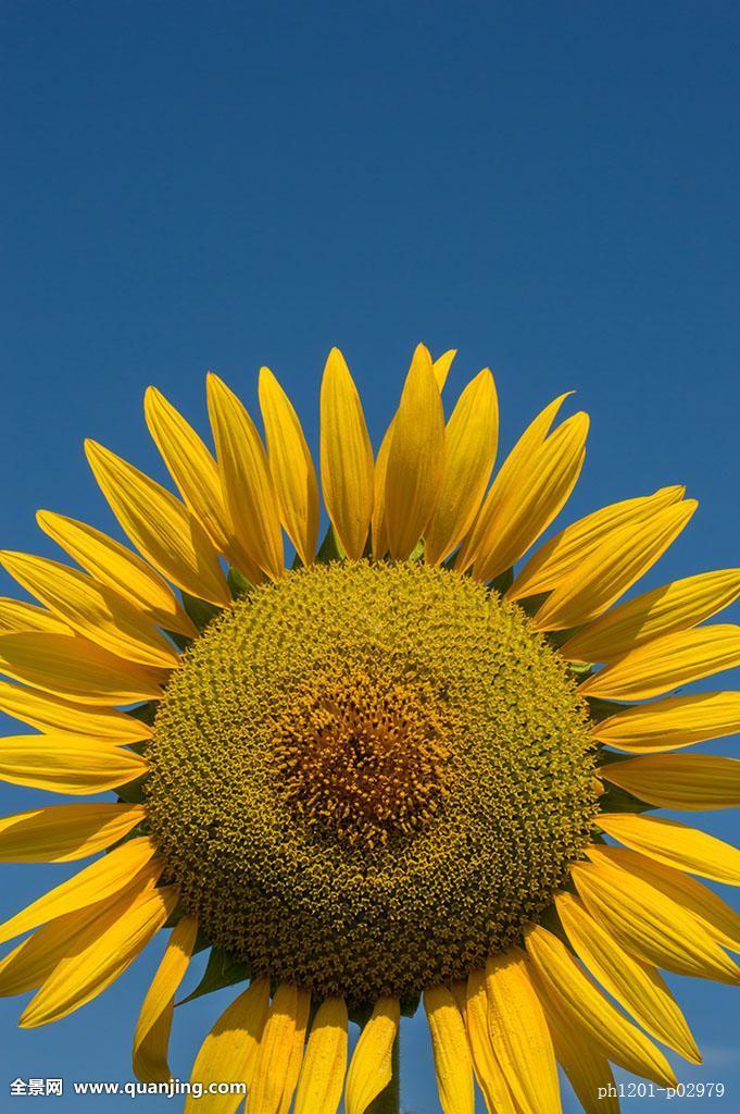 阳光向上的图片_阳光向上图片-阳光向上女生图片/阳光向上风景图片/阳光向上 ...